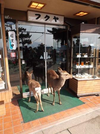 宮島の鹿の画像7