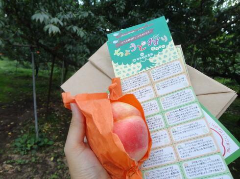 平田観光農園 ちょうど狩りはこう楽しむ!秋のよくばりフルーツ狩り