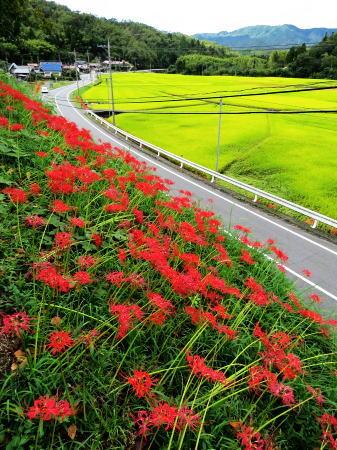 大竹市栗谷 風景3