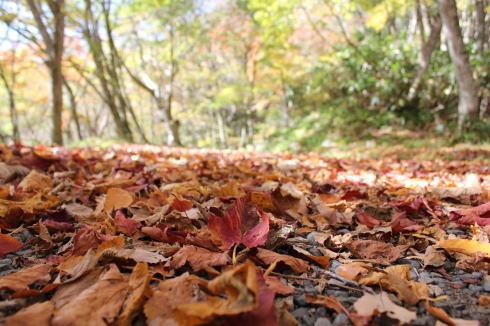 ひろしま県民の森 から登山 毛無山3