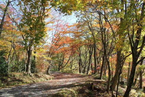 ひろしま県民の森 から登山 毛無山