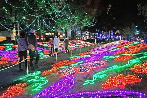 広島 イルミネーション 2014、お花畑