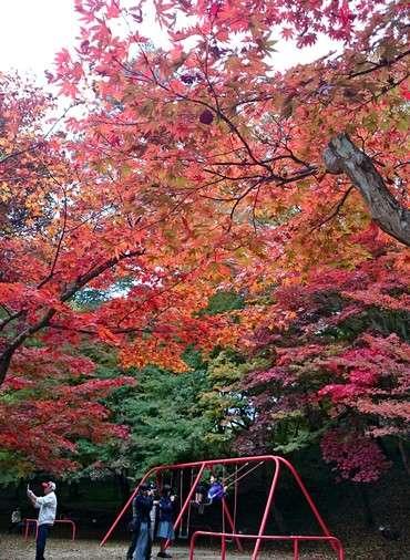 尾関山公園の紅葉 2014