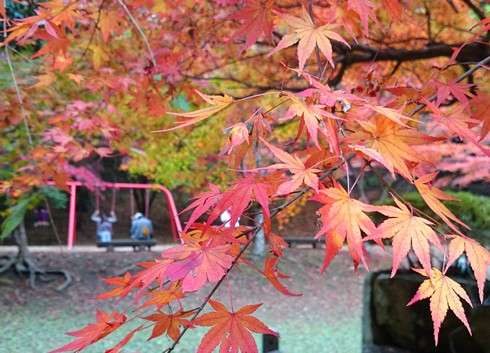 尾関山公園の紅葉 2014、綺麗に色づき始める