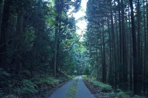 荒谷山へ向かう林道