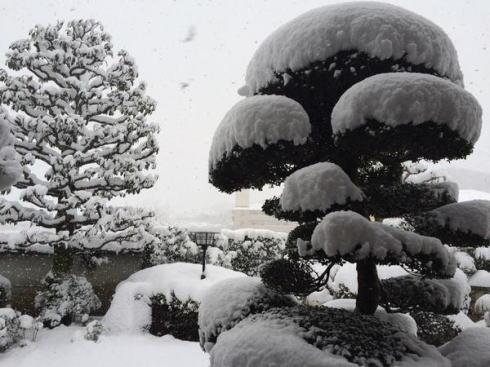 12月17日の大雪 廿日市市4