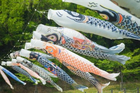 鯉のぼり事業を再び!土師ダム40周年記念で