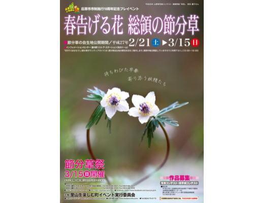 総領で節分草自生地公開、春を告げる儚げな花に熱視線