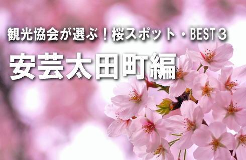 【安芸太田町編】観光協会が選ぶ!桜スポットBEST3