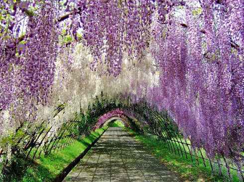 日本の最も美しい場所31選、米CNN選出で広島からは2か所!