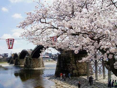 錦帯橋と桜 2015