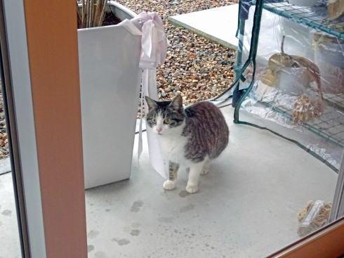 三次市 cafe mame茶 猫もあそびにくる