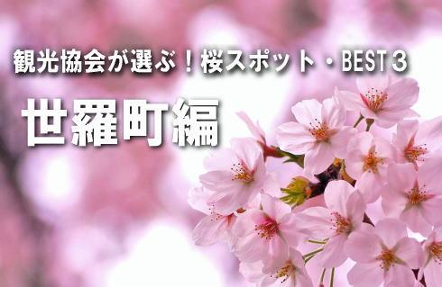 【世羅町編】観光協会が選ぶ!桜スポットBEST3
