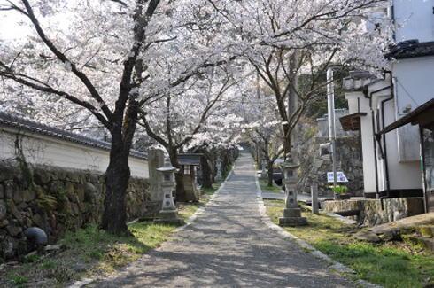 今高野山 桜スポット