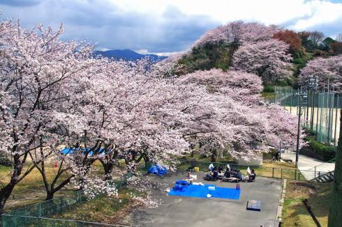 江田島公園 江田島桜スポット