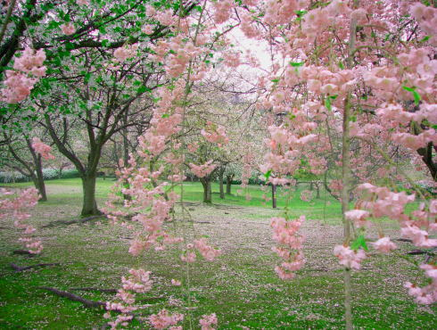 鏡山公園 桜の写真