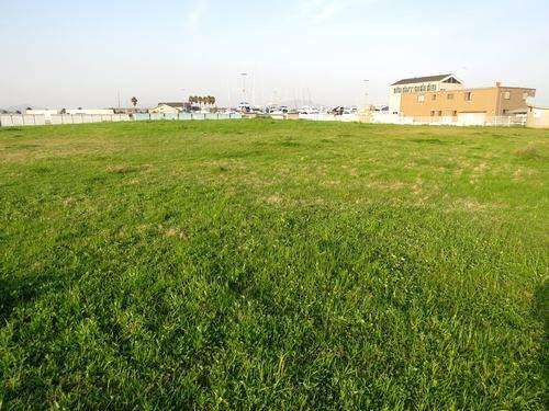 観音マリーナ海浜公園の芝広場
