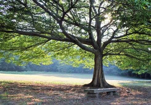 因島大橋記念公園、木陰のベンチ