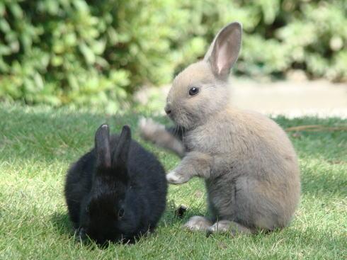 モフモフッ 大久野島で子ウサギが大量デビュー