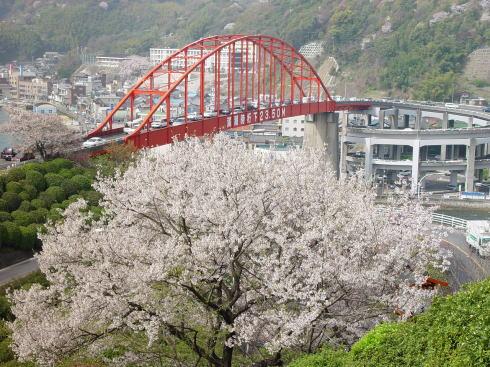 音戸の瀬戸公園 桜の写真