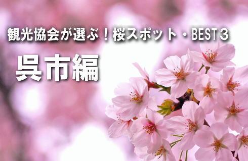 【呉市編】観光課が選ぶ!桜スポットBEST3