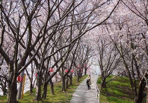 佐木島 塔の峰千本桜 画像3