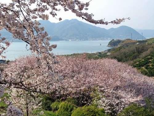 佐木島 塔の峰千本桜 画像6