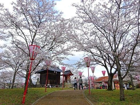 庄原 上野公園の桜 画像3