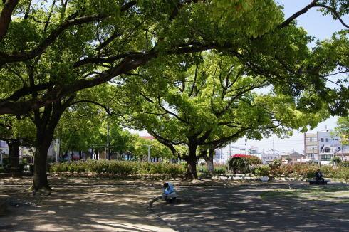 福山ばら公園 画像