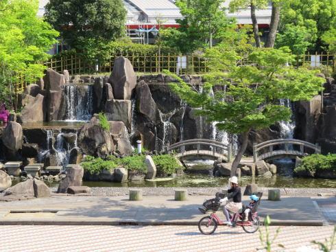 緑町公園 ばら園 画像5