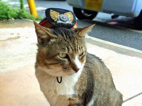 ネコの駅長 りょうまくん、志和口駅で今日もお勤め