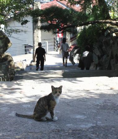 スバルCM 尾道の猫 画像