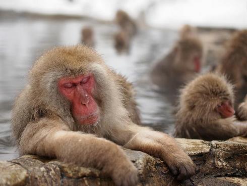 外国人が選ぶ「行って良かった!」日本の観光スポットランキング2015、広島県は3か所ランクイン
