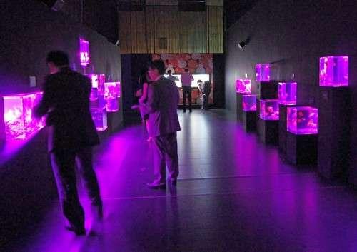 アートアクアリウム展 広島の写真4