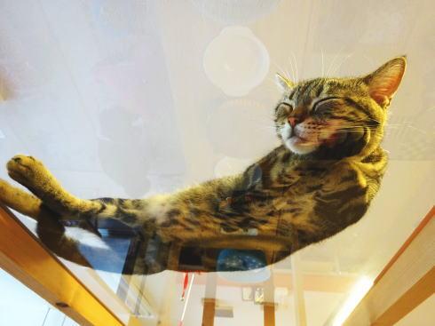 広島の猫カフェ バロン 店内の写真3