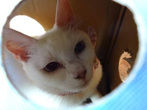 広島の猫カフェ バロン 店内の写真6