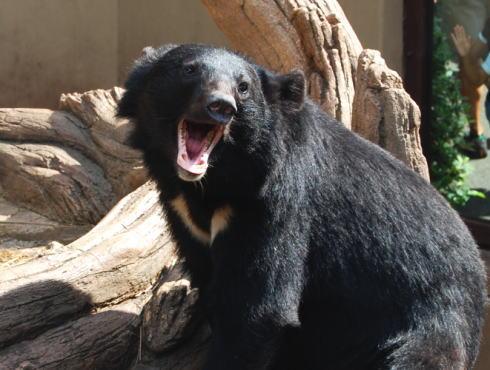 熊に注意!ツキノワグマが動き回る季節に気を付けたい6つのポイント