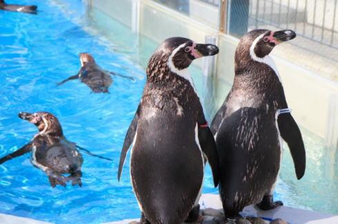 ナイトツアーにペンギン2ショット撮影など、宮島水族館でクリスマスイベント