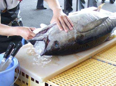 中央卸売市場「市場まつり」広島で年に1度の市場開放イベント