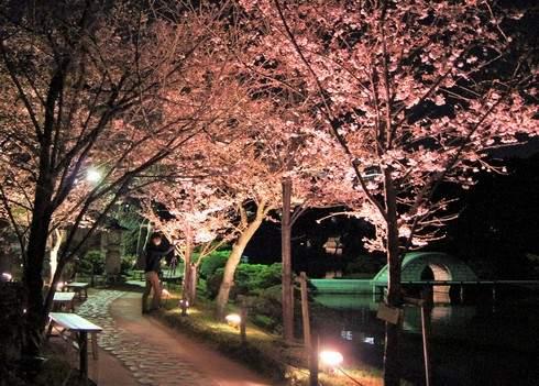 広島・縮景園の夜桜