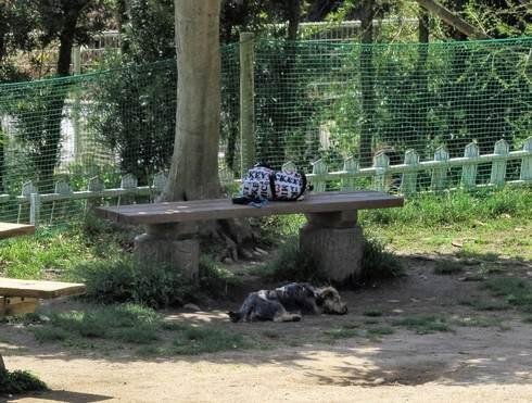 広島のドッグラン、木陰で休憩も