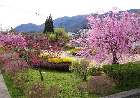 平和の園、安佐北区白木から想いを歌にのせ