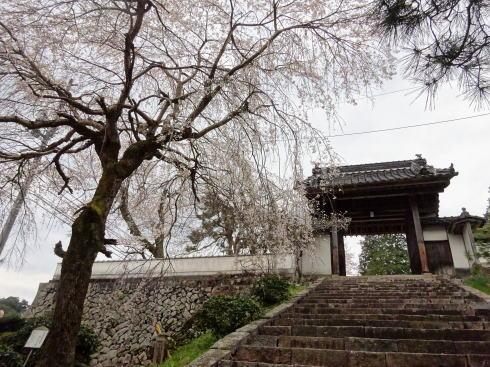 三次市 鳳源寺入口の枝垂桜