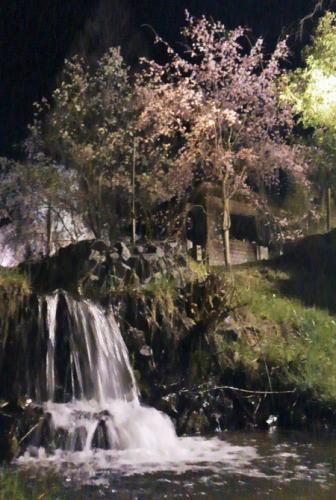世羅 甲山ふれあいの里 しだれ桜並木と小川