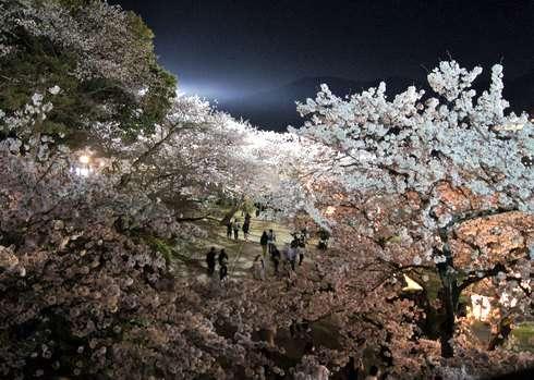 錦帯橋の夜桜 2016