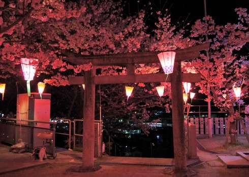 廿日市市大野・太田神社の夜桜