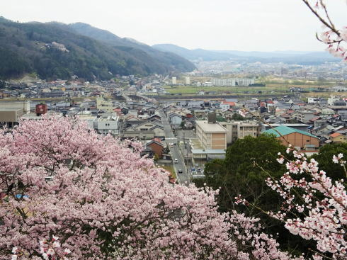 尾関山公園 展望台からの桜の眺め
