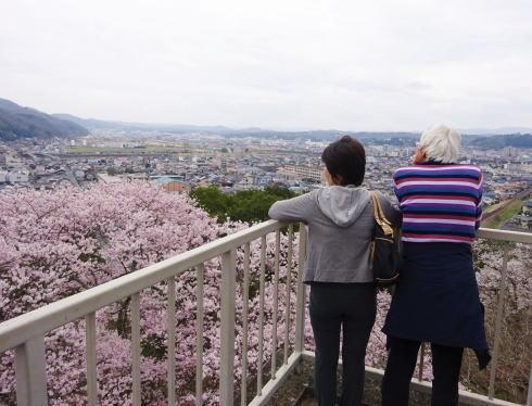 尾関山公園 2016年も桜の見ごろ、ライトアップも開催