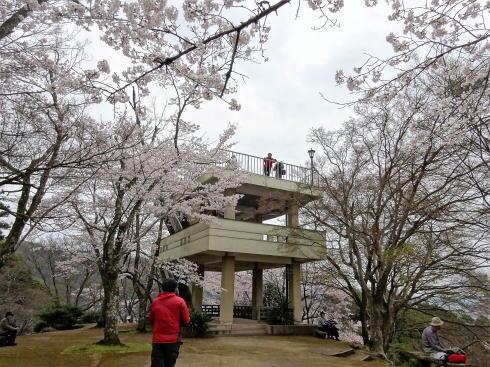 尾関山公園 展望台と桜