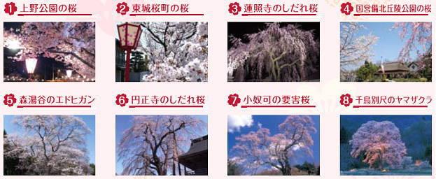 しょうばら桜フォトコンテスト